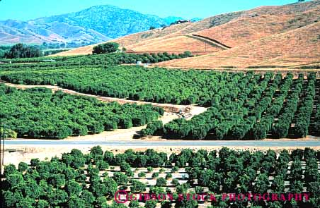 Stock Photo #6408: keywords -  agriculture california citrus crop crops elevated farm farming food fruit green grow growth horz orange oranges orchard produce row rows tree trees view