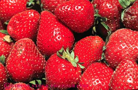 Stock Photo #6431: keywords -  agriculture california crop crops cultivate cultivated cultivating cultivation food fruit horz lots many multitude produce red strawberries strawberry