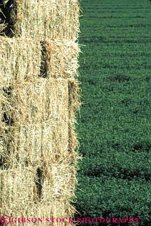 Stock Photo #6493: keywords -  agriculture alfalfa and bale baled california crop crops cultivate cultivated cultivating cultivation farm farming farms feed field green grow growing growth harvest harvesting leaf leaves plant plants vert