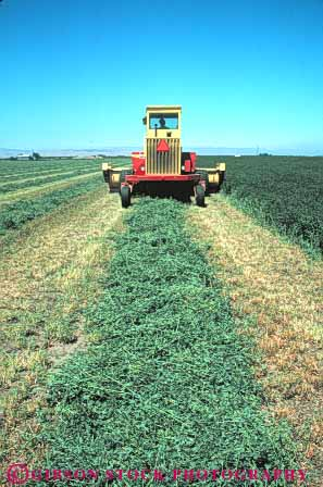 Stock Photo #6495: keywords -  agriculture alfalfa california crop crops cultivate cultivated cultivating cultivation cut equipment farm farming farms feed field green grow growing growth harvest harvested harvester harvesting leaf leaves machine plant plants vert