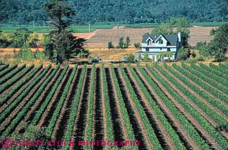Stock Photo #6574: keywords -  agriculture and california crop crops cultivate cultivated cultivating cultivation elevated farm farming farms grape grapes hill hills home horz napa parallel pattern plant plants produce row rows rural view vine vineyard vineyards