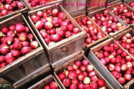 Stock Photo #6588: keywords -  agriculture apple apples autumn basket box boxes countless crate crates crop crops cultivate cultivated cultivation fall farm farming farms food frow fruit grid growing grown growth horz in lots many pattern pile produce red repeat repeats repetition square