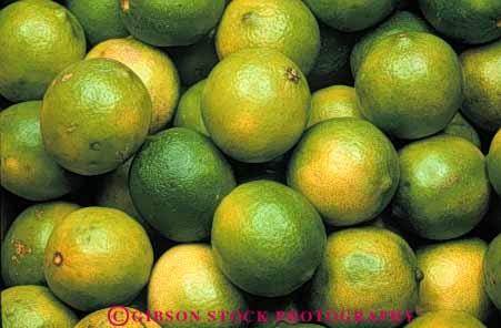 Stock Photo #6635: keywords -  agriculture citrus crop crops farm farming farms food fruit fruits green grow growing grown growth horz lime limes orchard orchards produce ripe tree trees