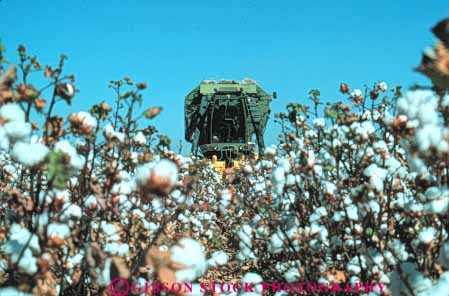 Stock Photo #6703: keywords -  agriculture big california cotton crop crops equipment farm farming farms field grow growing growth harvest harvester harvesting horz machine mature plant plants sprawl sprawling