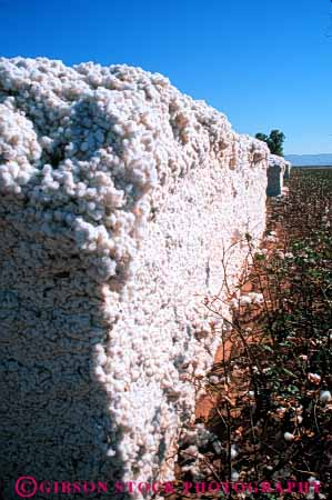 Stock Photo #6719: keywords -  agriculture arizona cotton crop crops farm farming farms harvest harvested harvesting pile process processing stack stacked vert