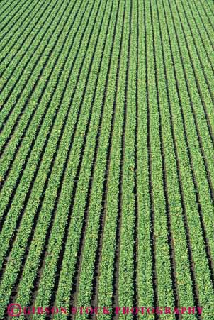 Stock Photo #6768: keywords -  agriculture california crop crops cultivate cultivating cultivation elevated farm farming farms field food green grow growing growth head heads leaf leaves lettuce linear pattern plant plants row rows vegetable vegetables vert view