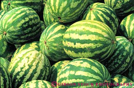 Stock Photo #6793: keywords -  agriculture big eat food fruit green heavy horz large lots many melon melons oblong oval pile plant plants pod pods round seed vegetable vegetables water watermelon watermelons