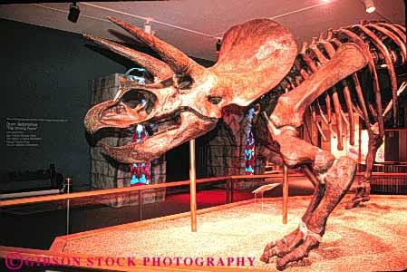 Dinosaur Brontosaurus Fossil Skeleton Witte Museum San