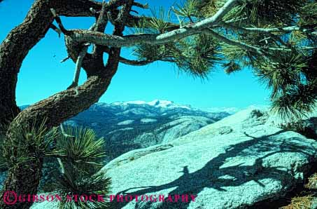 Stock Photo #7186: keywords -  alpine batholith california environment geologic geological geology granite horz landscape mountain mountains national nature outdoor park peak peaks relief rock rugged scenery scenic terrain through tree uplift view wild wilderness yosemite