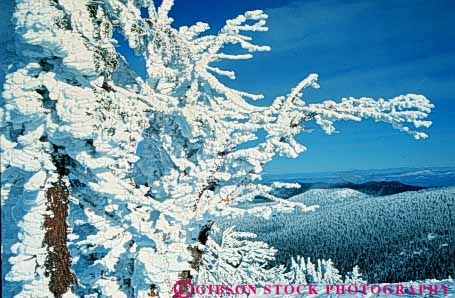 Stock Photo #3470: keywords -  alpine bachelor blizzard clean cold environment freeze fresh horz ice mount mountain nature oregon outdoor pristine quiet scenery scenic season snow tree wild wilderness winter
