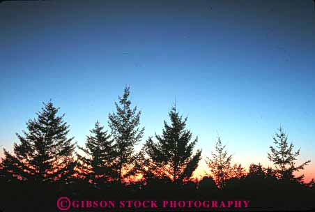 Stock Photo #7303: keywords -  climate conifer conifers dawn dusk evergreen forest horz landscape mood moody nature pine scenery scenic silhouette silhouettes sun sunrise sunset tree trees warm weather