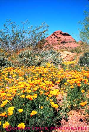 First Signs of the 2012 Arizona Wildflower Season Are Here