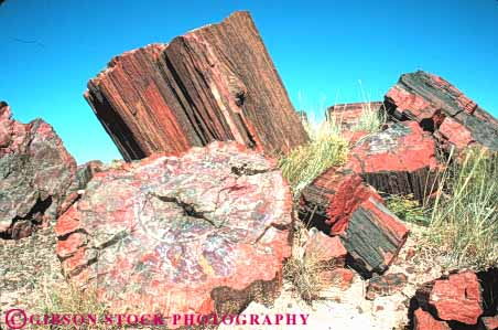 Stock Photo #7395: keywords -  arizona dated forest formation fossil fossilized fossils geologic geological geology horz mineralized national old paleontology park petrification petrified prehistoric rock stone tree trees wood