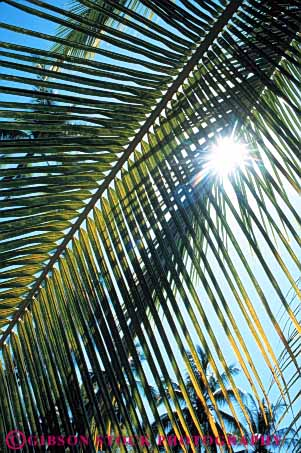 Stock Photo #7398: keywords -  abstract abstraction abstracts branch bright burst celestial leaf leaves light palm pattern plant plants sky solar star sun sunny sunshine tree trees vert