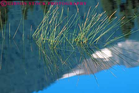 Stock Photo #7047: keywords -  abstract abstraction abstracts alone aquatic calm clean environment fresh freshness freshwater grass horz image in lake landscape mirror mood moody natural nature peace peaceful plant pond pristine privacy private pure quiet reflect reflecting reflection reflects remote scenery scenic secluded serene serenity solitary solitude still umtrampled water wet wild wilderness