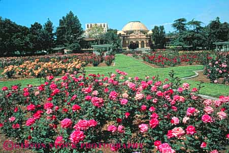 rose garden at Natural History Museum Exposition Park Los Angeles ...