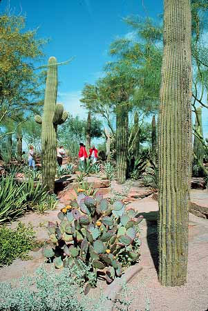 People Touring Cactus Garden At Ethel M Chocolates Henderson Near Las Vegas Nevad Stock Photo 17685