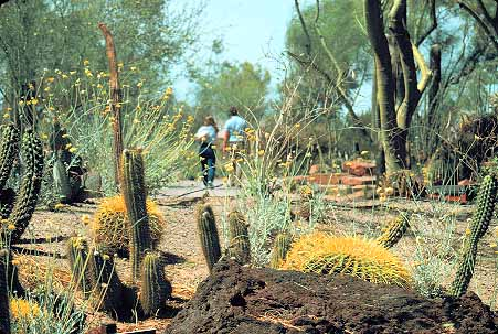 Couple Touring Cactus Garden At Ethel M Chocolates In Henderson Near Las Vegas Ne Stock Photo 17686