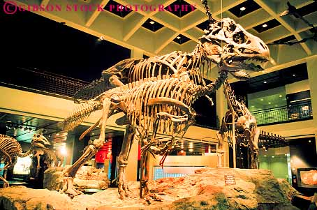 The Skeleton And Skull Of A Triceratops On Display In Morian Hall Paleontology