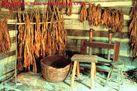 Stock Photo #3385: keywords -  cabin carolina cure cured cures curing dried dries dry drying hang hanging hangs historic history horz hung in leaf leaves living north old reenactment salem tobacco