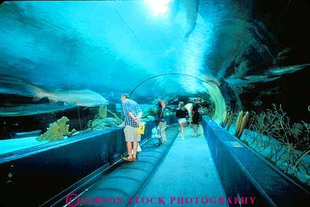 People In Dangerous Reef Walk Through At Ripleys Aquarium Myrtle Beach South Caro Stock Photo 14685