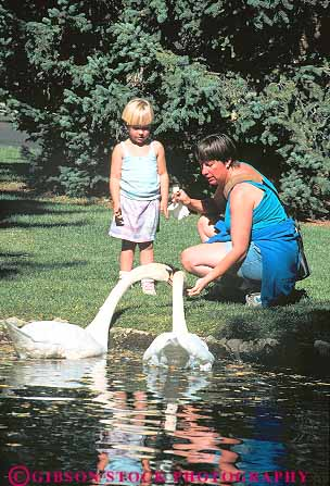 Released mother daughter feed swans sun valley idaho stock for Mother daughter vacation destinations