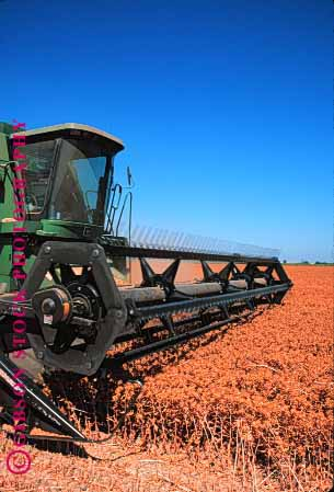 Stock Photo #1277: keywords -  agriculture california colusa crop cut equipment farm farming farms field food grow harvest harvester harvesters harvesting harvests implement in machine safflower summer vert working
