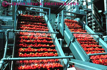 Stock Photo #1281: keywords -  agriculture betl california clean conveyor conveyors crop equipment farm food grow harvest horz lift lifting lifts machine prepare process processing red stockton summer tomato tomatoes vegetable wash