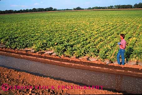 Stock Photo #1304: keywords -  agriculture beet california ditch farm farmer farmers farming farmland field hold holding holds horz in irrigation man next people person released shovel stand standing stands sugar uses work worker working