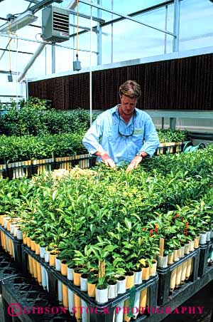 Stock Photo #6024: keywords -  agriculture career citrus department employee examine ft government greenhouse grow horticulture investigate job male man men monitor occupation of people person pierce plant plants released research researcher study vert vocation watch work worker