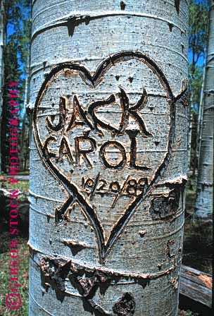 Stock Photo #1328: keywords -  art bark carve damage graffiti heart love property tree unsightly vandal vert