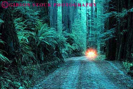 Stock Photo #1491: keywords -  alone auto california car dark dawn drive dusk fearful forest horz insecure isolated lights redwood remote road route rural street sunrise sunset vehicle