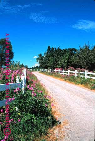 Stock Photo #1518: keywords -  california country countryside curve dirt farm flowers foliage landscape path ranch remote road route rural scenic vert