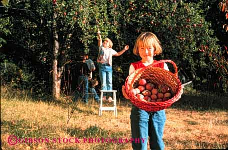 Stock Photo #1957: keywords -  agriculture apple apples basket baskets boy child children friend friends fruit fruits gather gathering gathers girl group harvest harvested harvesting harvests holding horz in kid kids model nature of orchard outdoor pick picked picking picks released team together tree trees youth