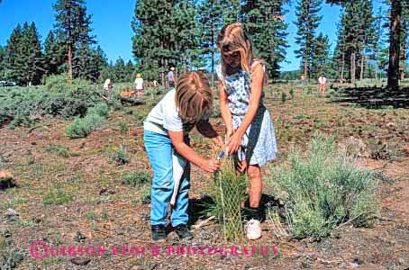 Stock Photo #2064: keywords -  child children community girl girls horz kid kids pine planting project projects public reforestation released service tree youth