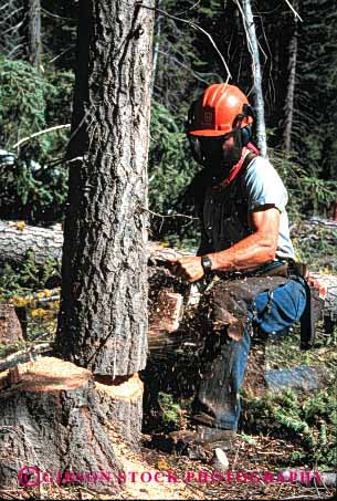 Stock Photo #2294: keywords -  care career careful caution chain chainsaw chainsaws clothing cut cuts cutting danger examine exercise falling forest forestry hardhat harvest health income industry job jobs labor log logger loggers logging logs look lumber natural occupation pine power protective renewable resource risk saw saws sharp skill study tool tree trees vert wear wood work