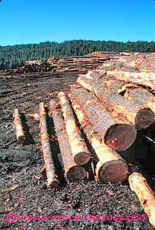 Stock Photo #2295: keywords -  forest forestry harvest idaho industry inventory log logging logs lumber mill mills natural pile piled piles renewable resource round stack stacks vert wood