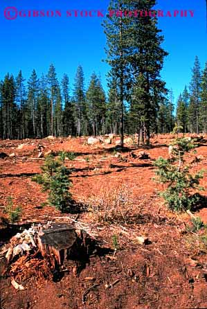 Stock Photo #2297: keywords -  california cut forest forestry harvest industry log logging lumber natural renewable resource selective tree vert wood
