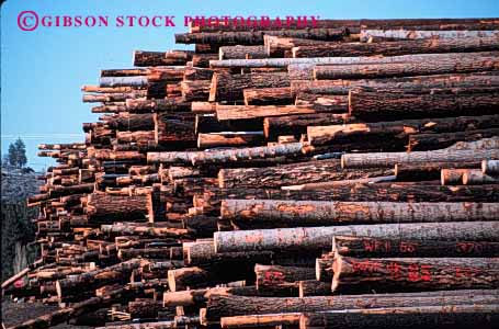 Stock Photo #2300: keywords -  forest forestry harvest horz industry inventory log logging lumber mill natural renewable resource stack storage wood