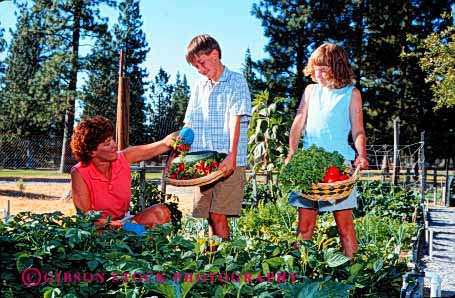 Stock Photo #2492: keywords -  boy brother child children crop crops cultivate daughter family female food garden gardening gardens girl grow harvest harvesting harvests home horz lettuce mother parent plant released residential sibling siblings single sister son summer together tomato tomatos vegetable vegetables warm wife woman
