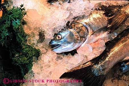 Stock Photo #2652: keywords -  display fish fresh horz in market retail salmon seafood sell