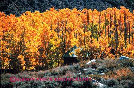 Stock Photo #3052: keywords -  alone aspen autumn away cabin fall forest get home horz house isolate landscape mountain nature old orange private remote retreat rustic scenic small solitude tradition wilderness yellow