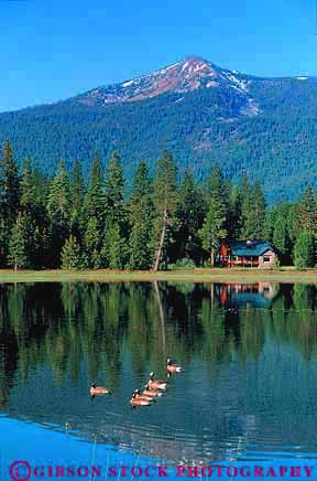 Released Cabin On Mountain With Geese Lake Mt Shasta