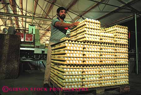 Stock Photo #3181: keywords -  agriculture countless egg eggs factory farm fragile horz inventory lots many multitude not numerous poultry process produce released shipping stack stacked stacks tray trays worker