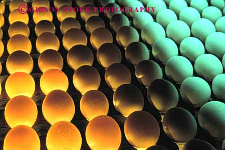 Stock Photo #3183: keywords -  agriculture countless egg factory farm fragile horz many numerous oval pattern poultry process produce round translucent transparent