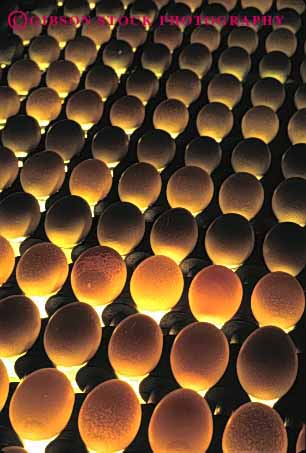 Stock Photo #3186: keywords -  agriculture countless egg factory farm fragile many numerous oval pattern poultry process produce round translucent transparent vert