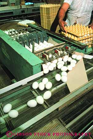 Stock Photo #3187: keywords -  agriculture conveyor countless egg factory farm fragile machine many numerous poultry process produce vert