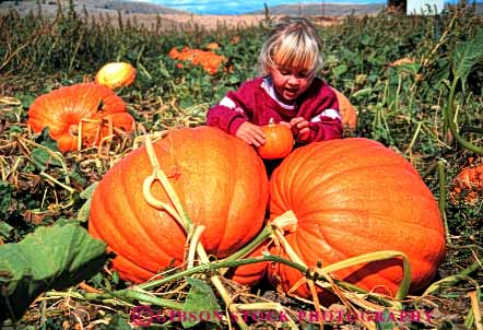 Stock Photo #4631: keywords -  autumn big choose country countryside fall farm find girl grow halloween harvest holiday horz huge large orange outdoor outside pair pick produce pumpkins released round season select squash two vine