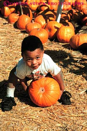 Stock Photo #4634: keywords -  african american autumn black boy child choose country countryside ethnic fall farm find grow halloween harvest holiday minority orange outdoor outside pick produce pumpkin race round season select squash toddler vert vine with