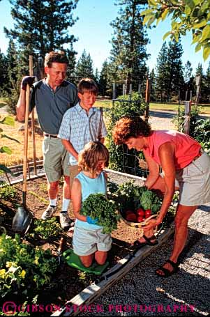 Stock Photo #5068: keywords -  cooperate cooperating cooperative cultivate family food garden gardener gardening grower grown harvest hobby home outdoor outdoors outside plant plants released residence residential share skill soil summer team together vegetable vegetables vert work